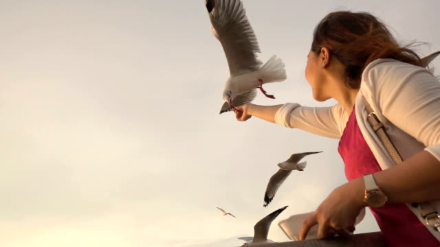 Young woman feeding seagulls on tropical beach