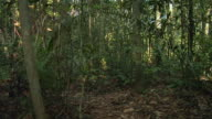 SLO MO, WS, Young woman in camouflage dress walking through  jungle, Manaus, Brazil