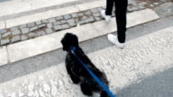 Young woman walk with her dog on leash
