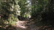 Jonge vrouw met buik wandelen in bergachtige woud