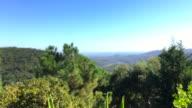 Yucca tree & panoramic sea view