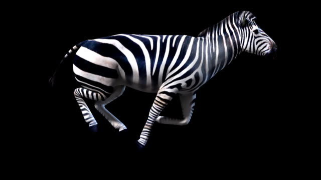 zebra runs (loopable+alpha channel included)