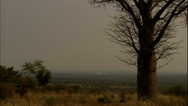 Zoom in over large tree on plain to Victoria Falls in distance