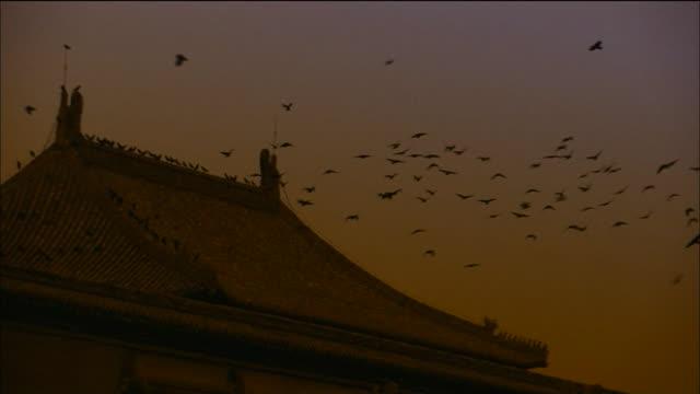 Zoom in to birds flocking above Pavilion at sunset, Forbidden City, Beijing