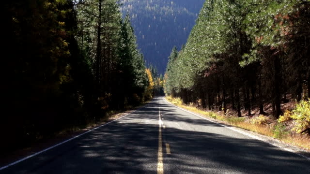 Zoom out and in telephoto shot of empty highway running through evergreen forest with golden yellow fall colored trees along edge.
