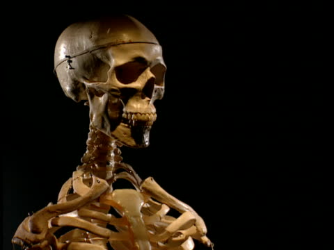 Zoom out from skull to illuminated skeleton against black background