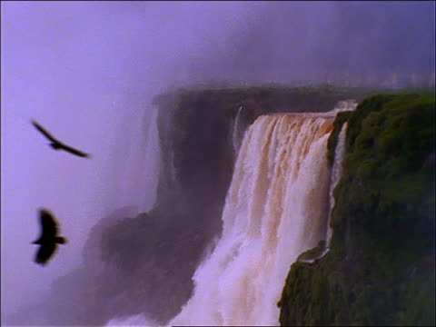 zoom out to wide shot, zoom in of Iguacu Falls (Victoria Falls) / Argentina / Birds flying in foreground