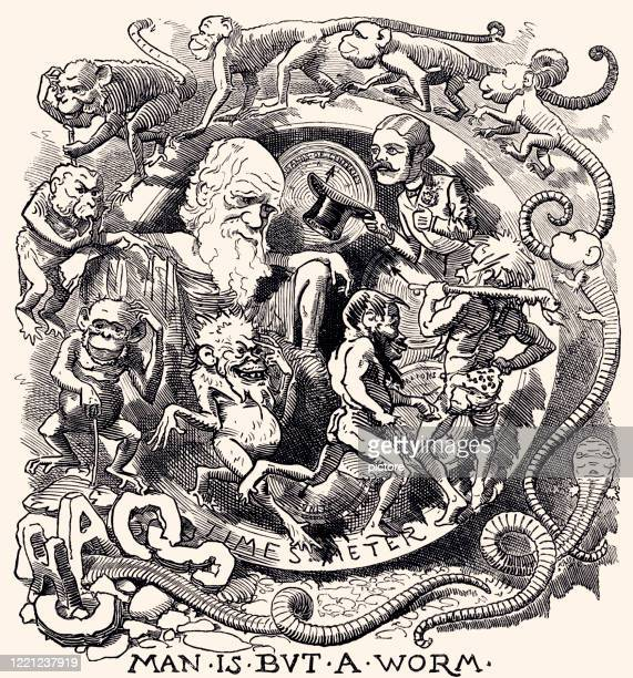 charles darwin: theory of evolution (xxxl) - satire stock illustrations