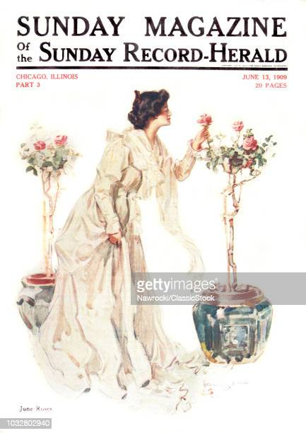 1900s WOMAN PICKING ROSE FROM TOPIARY ROSE BUSH WEARING LONG DRESS COVER OF SUNDAY MAGAZINE JUNE 1909