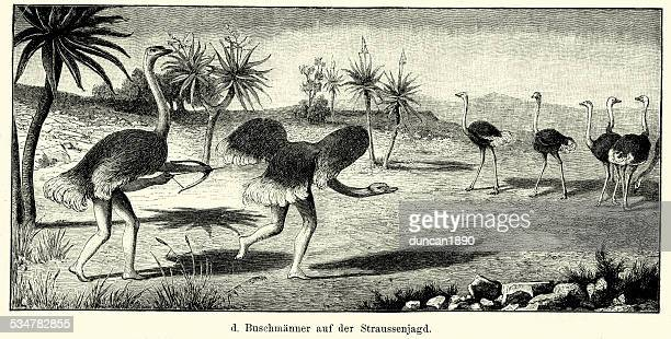 19th century africa -   bushman hunting ostrich - ostrich stock illustrations, clip art, cartoons, & icons