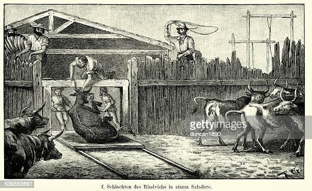 ilustraciones, imágenes clip art, dibujos animados e iconos de stock de 19 th century argentina-sacrificio de las reses en una saladero - matadero