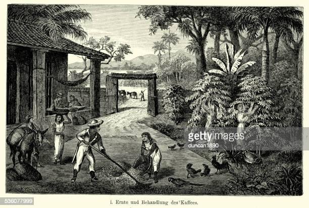19th century brazil - coffee plantation - währung stock illustrations
