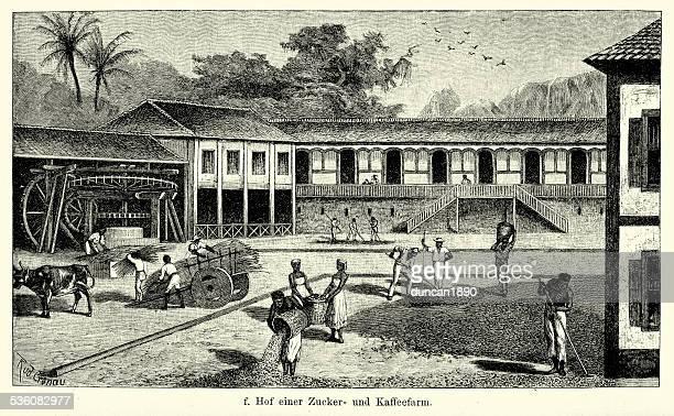 ilustrações, clipart, desenhos animados e ícones de século 19, brasil-açúcar e plantação de café - século xix