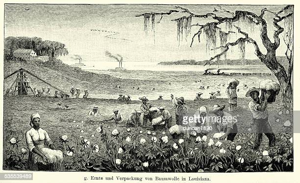 19th century north america -  harvesting cotton in louisiana - southern usa stock illustrations, clip art, cartoons, & icons