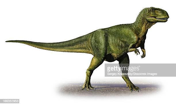 Abelisaurus comahuensis, a prehistoric era dinosaur from the Late Cretaceous period.