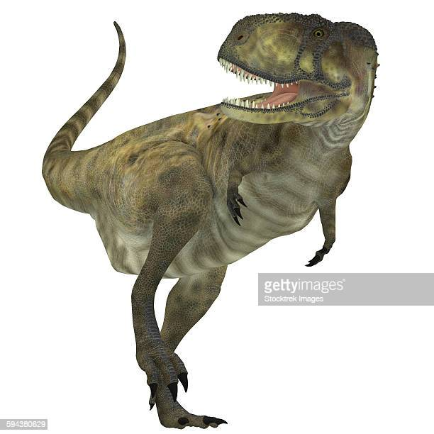 Abelisaurus dinosaur, white background.
