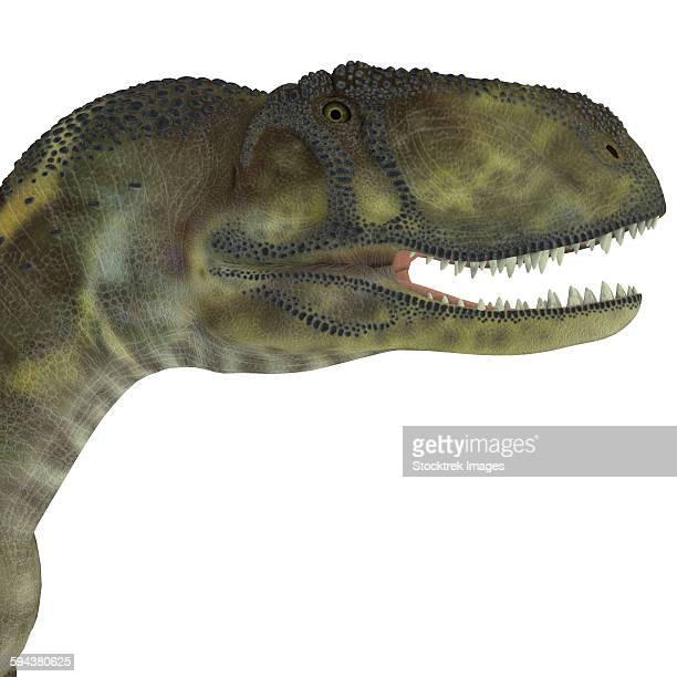 Abelisaurus portrait.
