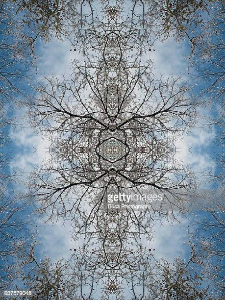 abstract image: kaleidoscopic image of bare tree branches against the sky - beauty stock illustrations