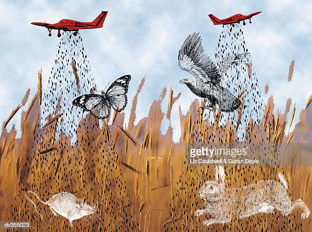 Abstract of cropdusters dropping pesticides on wildlife