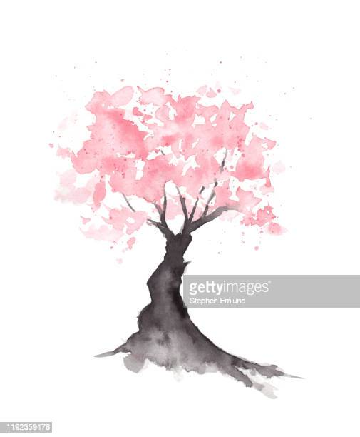 20+ Japanese Cherry Blossom Tree Silhouette Pics