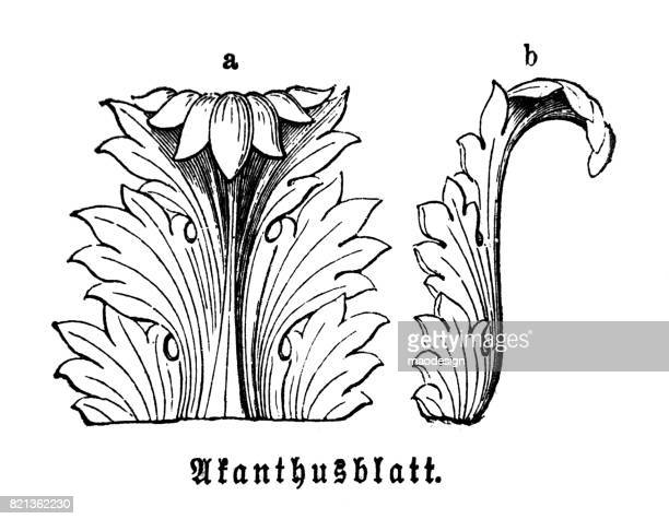 acanthus leaf  -  ancient ornament technique of decorating - corinthian stock illustrations, clip art, cartoons, & icons