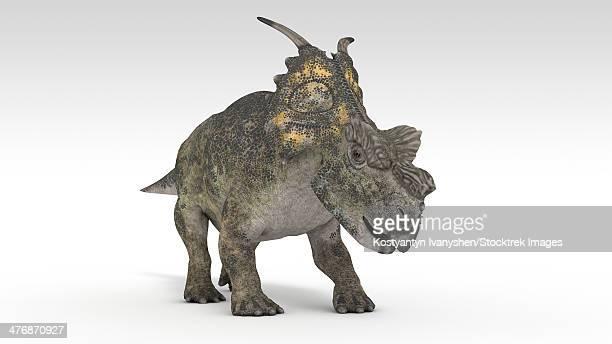 Achelousaurus dinosaur, white background.