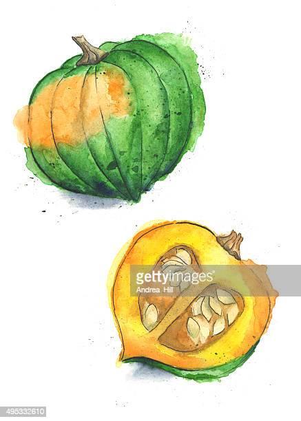 Acorn Squash Painted in Watercolor