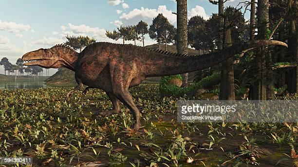 ilustraciones, imágenes clip art, dibujos animados e iconos de stock de acrocanthosaurus dinosaur roaming a cretaceous landscape. - paleozoología