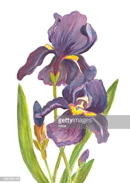 Acrylic painted iris flowers on white backround