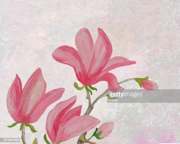 Acrylic painted magnolia flowers on white background