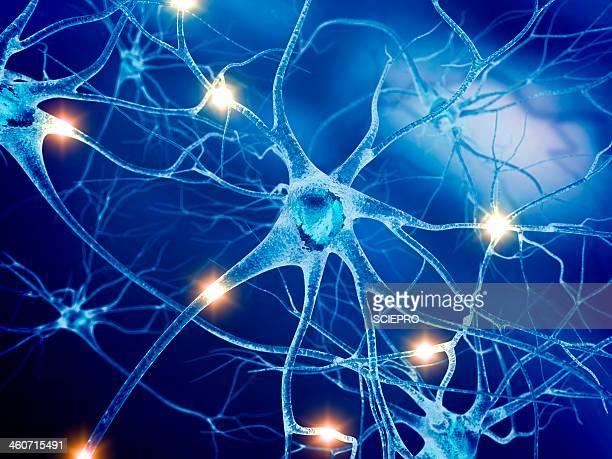 active nerve cells, artwork - synapse stock illustrations