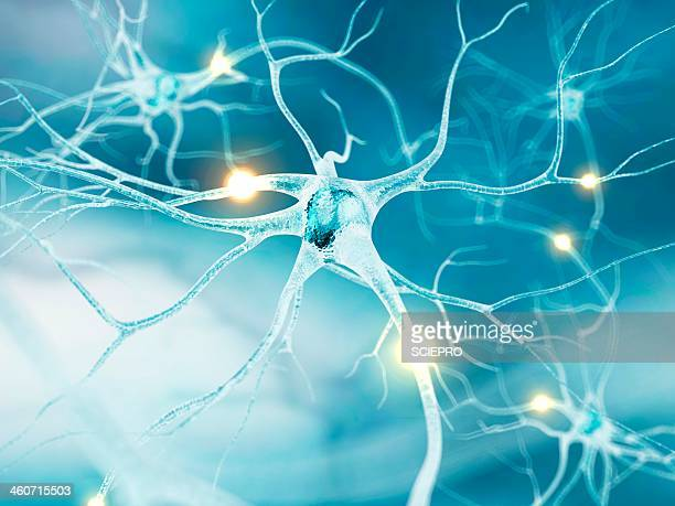 ilustrações de stock, clip art, desenhos animados e ícones de active nerve cells, artwork - sistema nervoso central