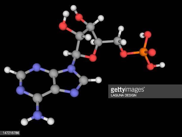 adenosine monophosphate molecule - amplifier stock illustrations, clip art, cartoons, & icons