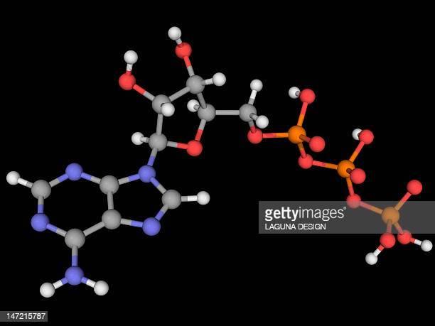 ilustraciones, imágenes clip art, dibujos animados e iconos de stock de adenosine triphosphate molecule - mitocondria