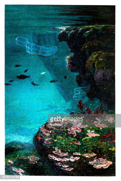 adriatic sea - at the bottom of stock illustrations