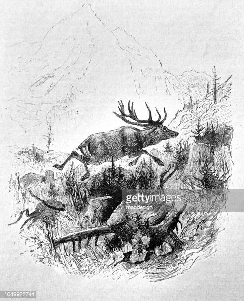 adult deer in their mountainous terrain - 1888 - tree rings stock illustrations, clip art, cartoons, & icons