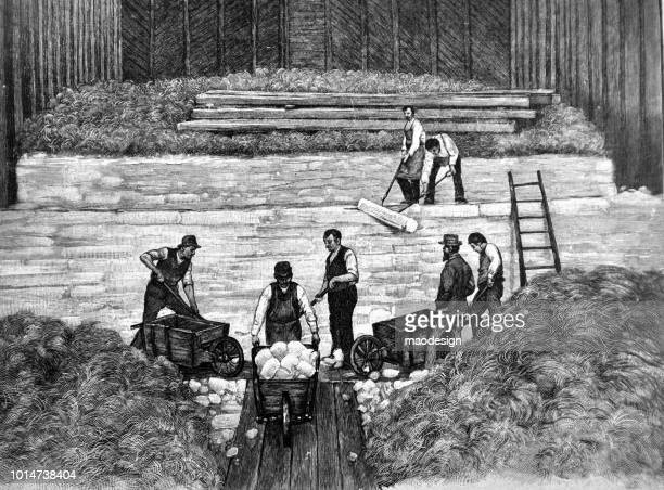 Adult men store cotton - 1895