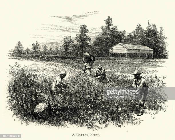 綿花畑は、19 世紀のアフリカ系アメリカ人 harvisting 作物 - 1890~1899年点のイラスト素材/クリップアート素材/マンガ素材/アイコン素材