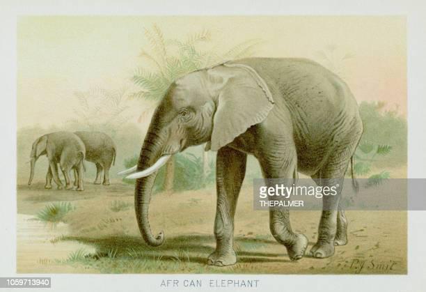 ilustrações de stock, clip art, desenhos animados e ícones de african elephant chromolithograph 1896 - elefante
