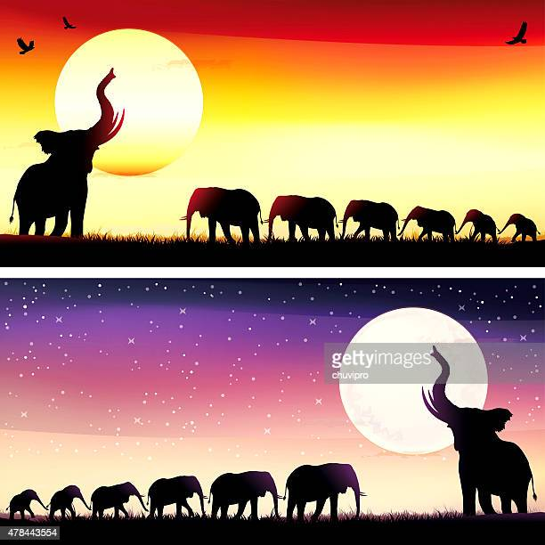african elephants silhouettes safari set - group of animals stock illustrations, clip art, cartoons, & icons