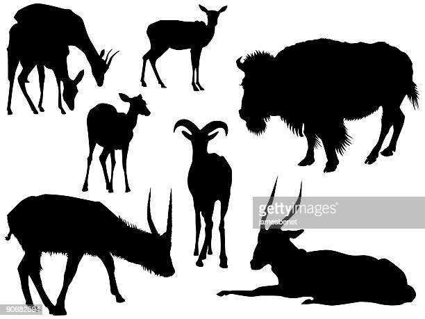african prairie animals (vector) - european bison stock illustrations, clip art, cartoons, & icons