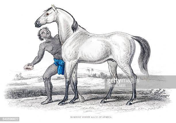 african white race horse 1841 - cameroon stock illustrations, clip art, cartoons, & icons