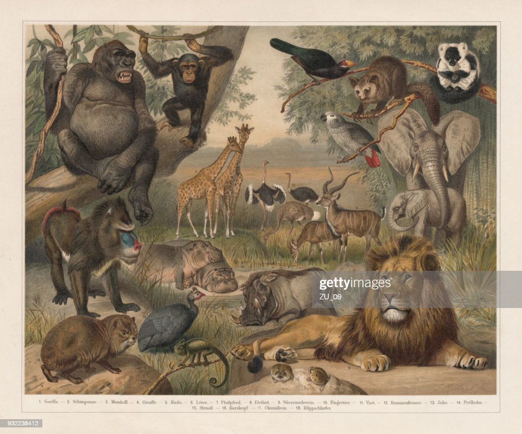 African wildlife, lithograph, published in 1897 : stock illustration