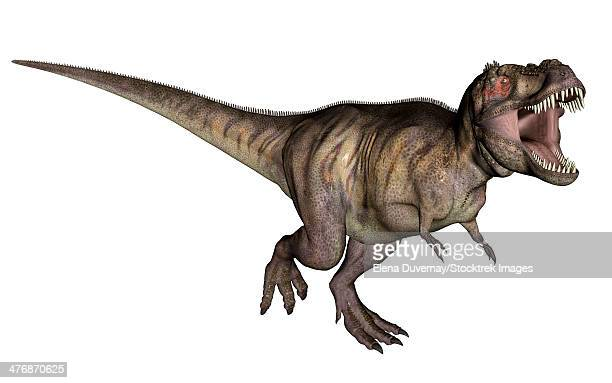 Aggressive Tyrannosaurus Rex growling, white background.