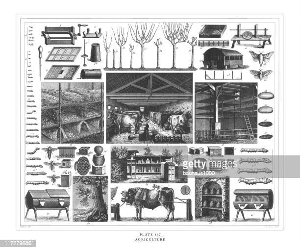 agriculture engraving antique illustration, published 1851 - milking stock illustrations, clip art, cartoons, & icons