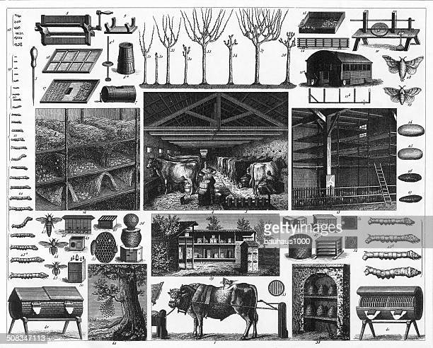 agriculture engraving - milking stock illustrations, clip art, cartoons, & icons