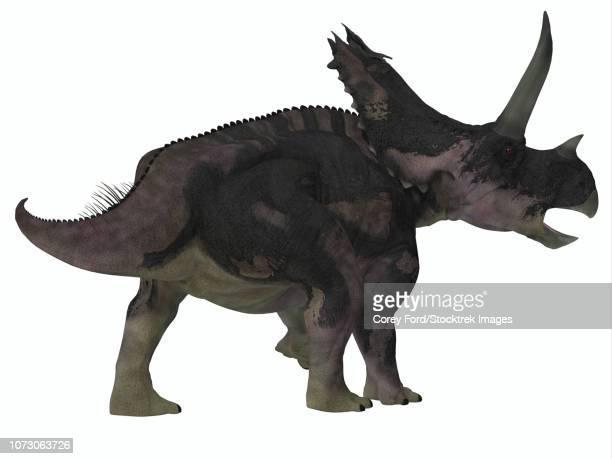 Agujaceratops dinosaur on white background.