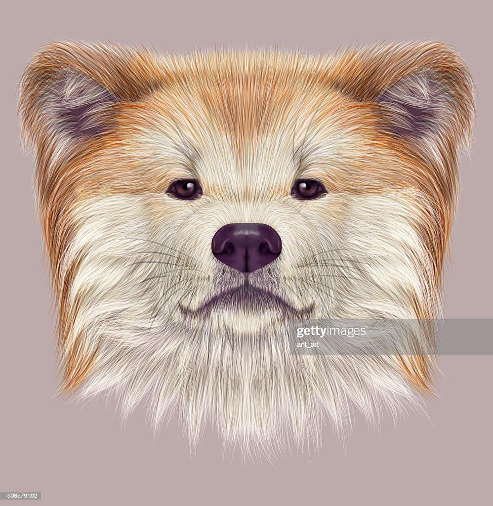 Akita japonais-Inu chien. : Illustration