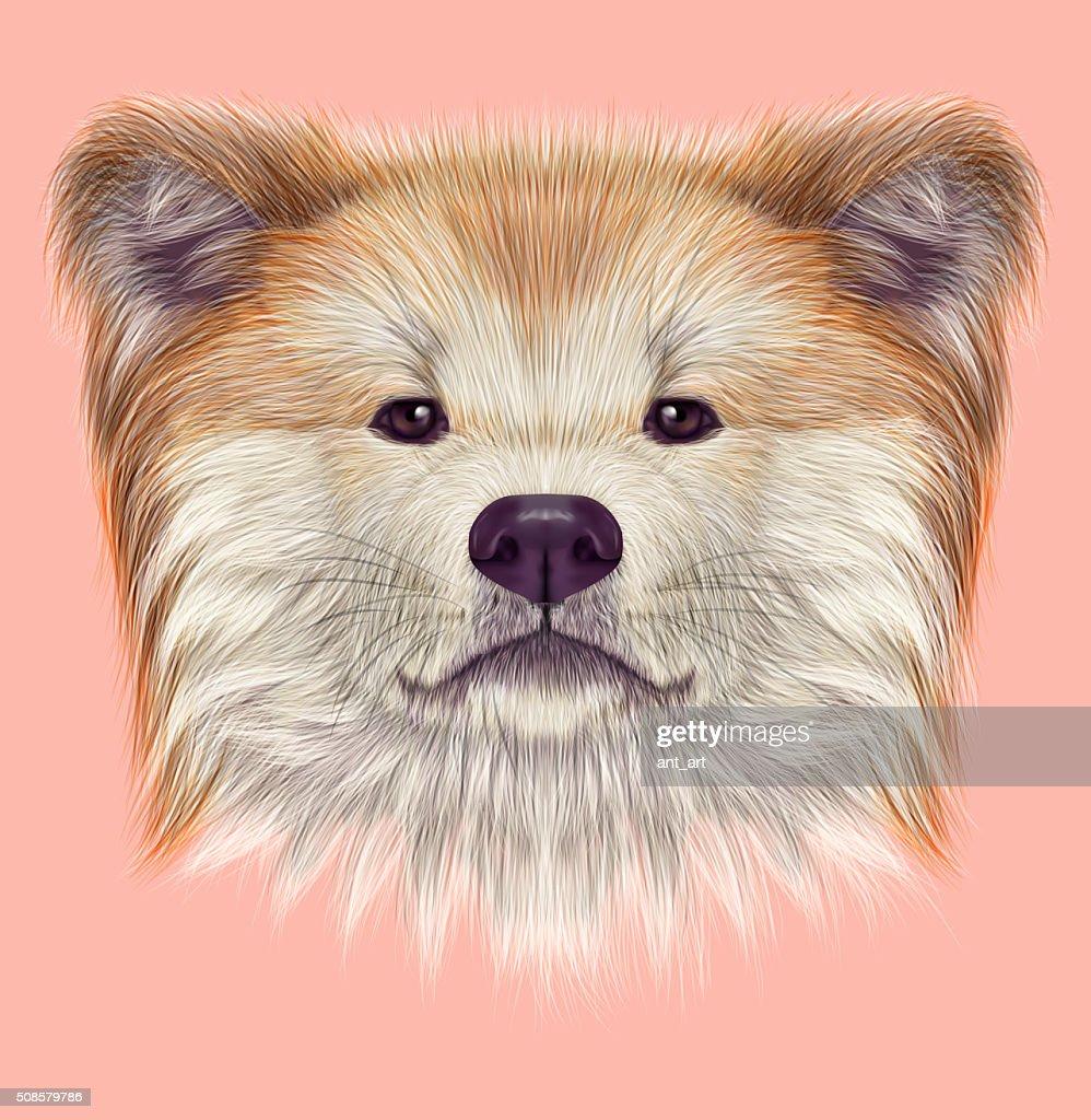 秋田 妖狐 日本の犬。 : ストックイラストレーション