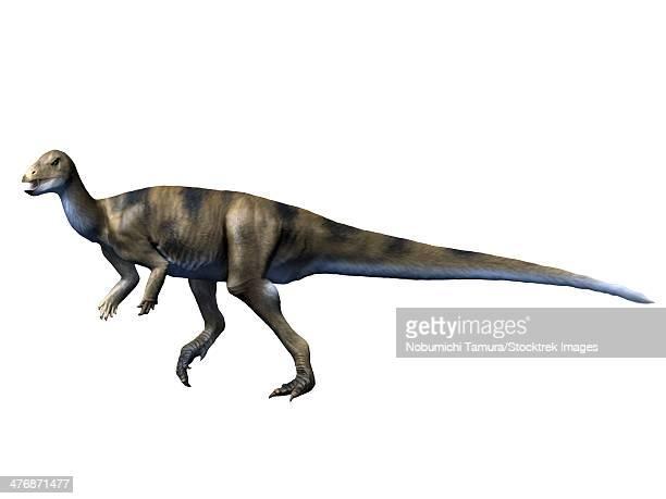 albertadromeus syntarsus, late cretaceous of canada. - animal body stock illustrations, clip art, cartoons, & icons